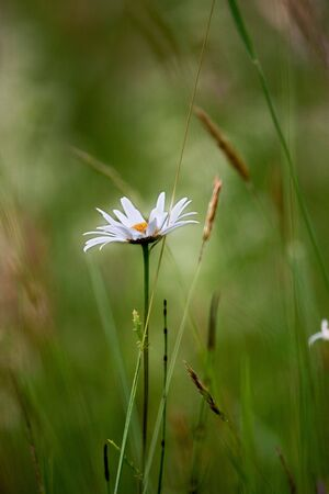 Meadows in Spring, with grass and different flowers Stock Photo - 5012254