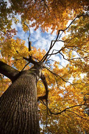tronco: Árbol en colores de otoñales en un día soleado