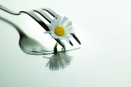 fine silver: Steel Forks with daisy flower on shiny mirror surface