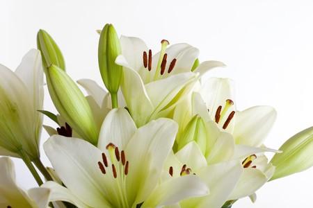 White Lily flowers on white background studio shot photo