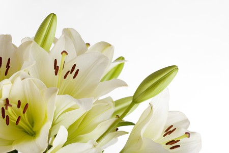 White Lily flowers on white background studio shot Stock Photo