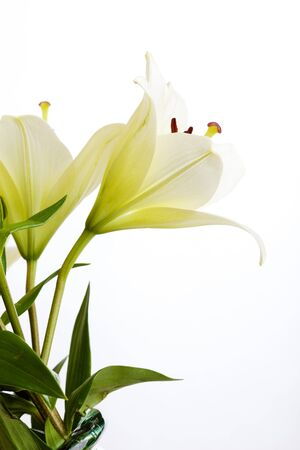 White Lily flowers on white background studio shot Stock Photo