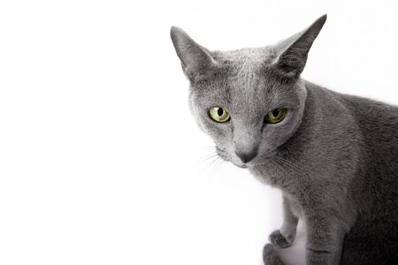 Gato de aspecto gracioso aislado en estudio blanco de tiro  Foto de archivo - 7230293