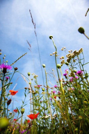 stalk flowers: Meadow in summer with different flowers and herbs Stock Photo