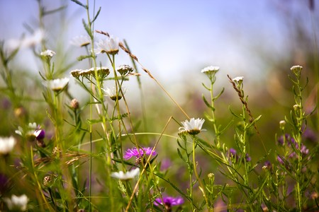 Meadow in summer with different flowers and herbs Stock Photo
