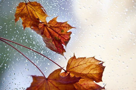 Autumn leaves on a rainy day with water drops photo