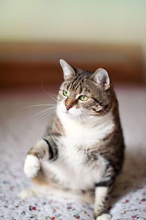 Portrait of a common european house cat photo