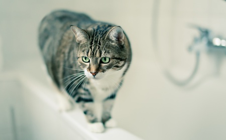 Portrait of a common european house cat in bathroom Stock Photo - 8443579