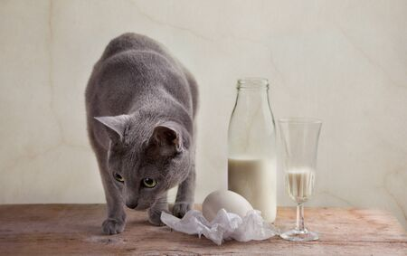 Still Life with Milk and Eggs Stock Photo - 8507831