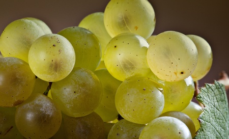 fresh and ripe white grapes on wooden board Stock Photo - 8584344