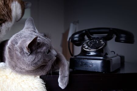 dial plate: Cats and old black manual phone with dial plate