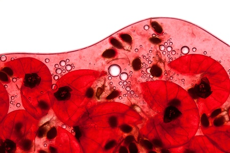 Crushed Red Currant Berries with juice and air bubbles photo
