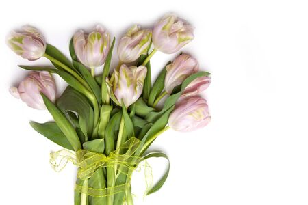 Pink Tulip flowers on white background photo