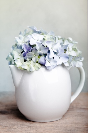 Still-Life with blue Hortensia Flowers in porcelaine can photo