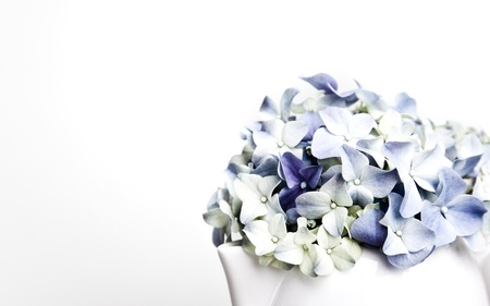 Still-Life with blue Hortensia Flowers in porcelaine can Stock Photo - 9405990