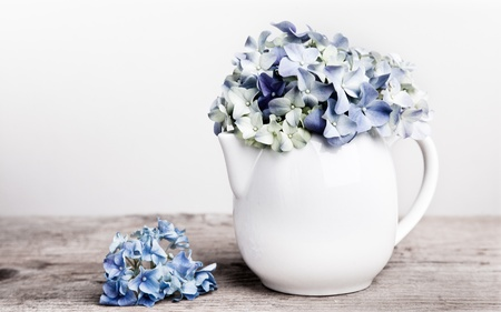 hydrangea: Still-Life with blue Hortensia Flowers in porcelaine can