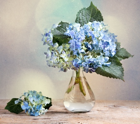 Still-Life with blue Hortensia Flowers in glass vase photo