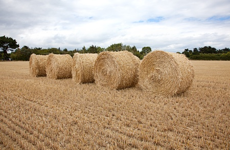Mowed fields with round hay bales in summer Stock Photo - 10239289