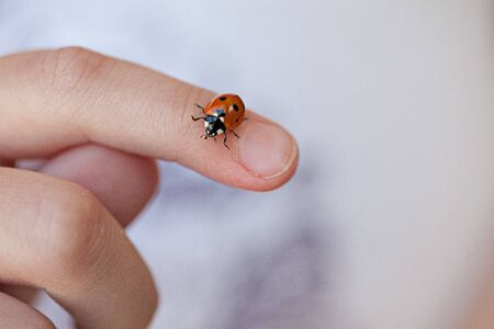 Small Ladybug crawling on childs hand and fingers photo