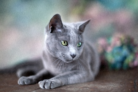 Portrait of a purebred Russian Blue Cat in Oil Painting Style Stock Photo