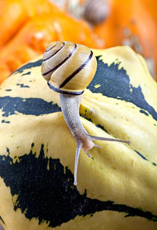 cucurbit: Autumn Image with small banded garden snails and Pumpkins