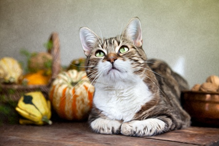 drawn metal: Autumn themed Cat portrait with Pumpkins and Walnuts