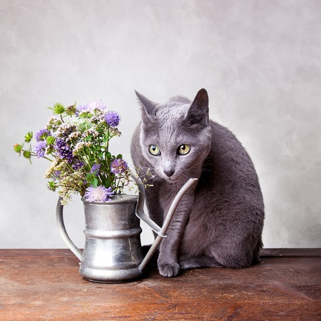 Cat with Flowers in old decorative watering can Stock Photo - 10903277
