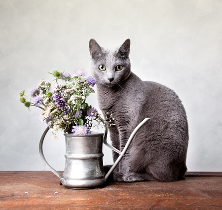 Cat with Flowers in old decorative watering can Stock Photo - 10903212