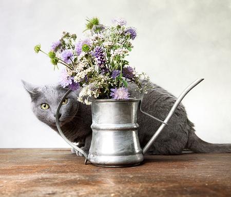 古い装飾的な水まき缶で花と猫