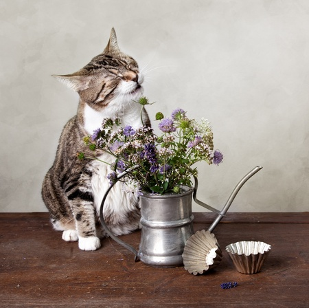 Cat with Flowers in old decorative watering can Stock Photo - 10903197