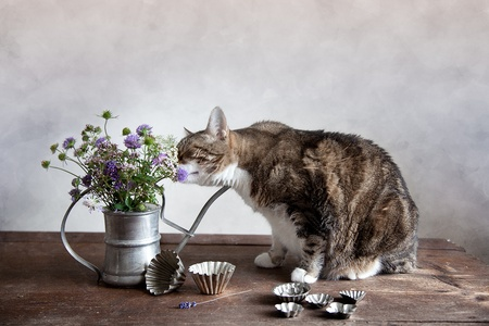 fineart: Cat with Flowers in old decorative watering can