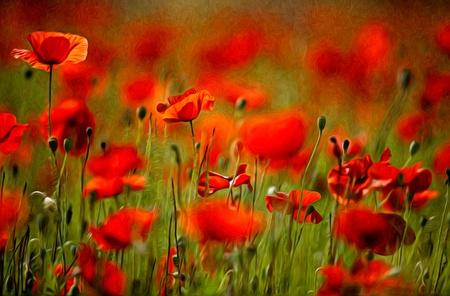 油絵風の赤いケシの花のイラスト