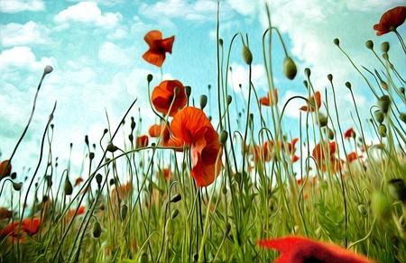 油絵風の赤いケシの花のイラスト 写真素材 - 10903167