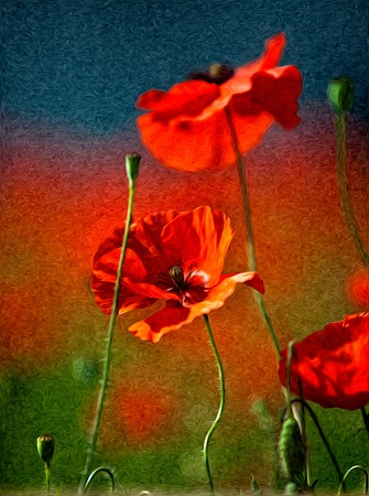 Illustration of Red Poppy Flowers in Oil Painting Style