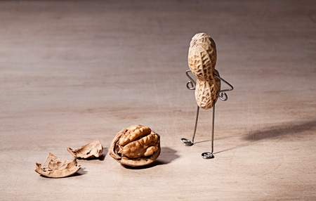 miniature dog: Miniature with Peanut Man and Walnut Brain