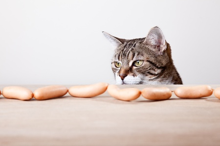 curiousness: Curious Cat being tempted by sausages on table