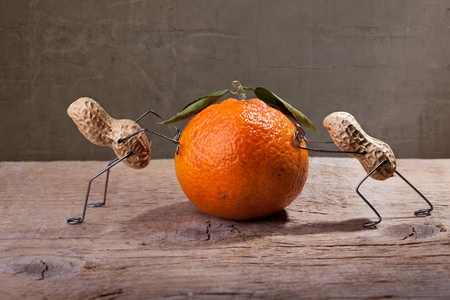 miniature people: Miniature with Peanut People working against each other, failing to move the orange Stock Photo