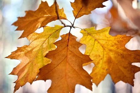 Beautiful autumnal colored tree leaves in  October Stock Photo - 11966333