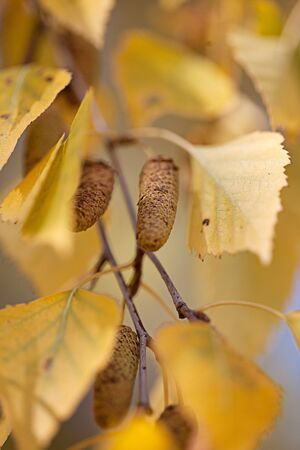 Beautiful autumnal colored tree leaves in  October photo