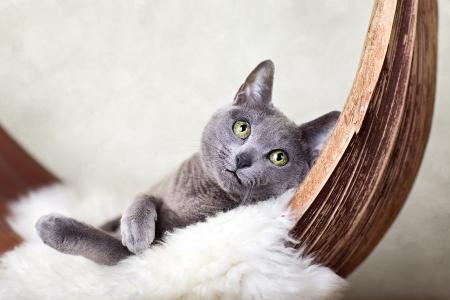 Cat relaxing on lambskin, in palm leaf bed. Standard-Bild