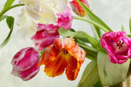 春に美しい明るいとカラフルなチューリップの花
