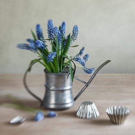 アンティークの水まき缶に並べられています素朴な木製のキッチン テーブルの上の古い金型ブドウ ヒヤシンスのある静物