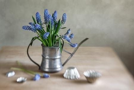 アンティークの水まき缶に並べられています素朴な木製のキッチン テーブルの上の古い金型ブドウ ヒヤシンスのある静物 写真素材 - 13725289