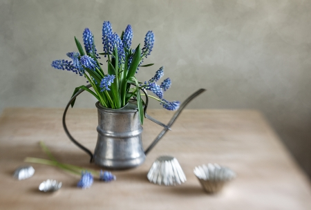 cut flowers: Still life with grape hyacinths arranged in an antique watering can with old moulds on a rustic wooden kitchen table