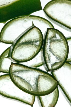 aloe vera background: Fresh slices of Aloe Vera on white Background, studio shot