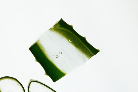 herbology: Fresh slices of Aloe Vera on white Background, studio shot