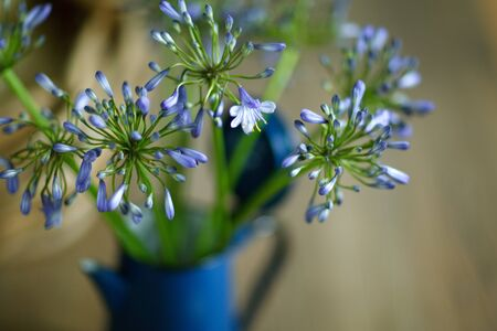 Retro Still Life with beautiful blue umbel flowers in old coffee pot photo