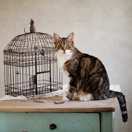housecat: Still Life with cat and birds cage - and a bird somewhere ... Stock Photo