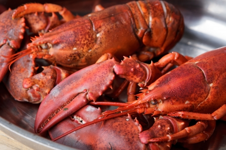 lobster pots: Freshly cooked lobsters served whole for dinner