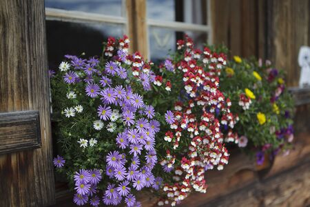 Colorful Flower Arragement on the windows of an Alpine Cabin in Austria Stock Photo - 15937630